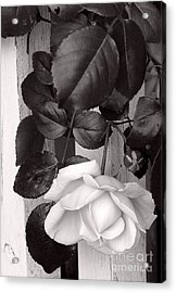 Sweet Petals Acrylic Print