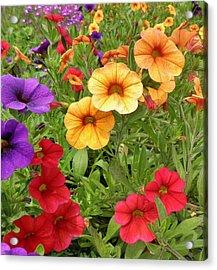 Sweet Petunias Acrylic Print