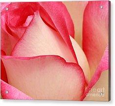 Sweet Rose Acrylic Print by Sabrina L Ryan