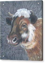 Sweet Shirley The Cow Acrylic Print by Claude Schneider