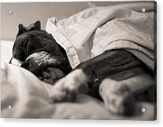 Sweet Sleeping Boxer Acrylic Print by Stephanie McDowell