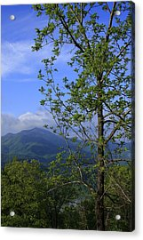 Sweet Springtime On The Blue Ridge Parkway Nc Acrylic Print by Mountains to the Sea Photo