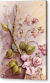 Sweet Sweet Pea Acrylic Print by Marta Styk