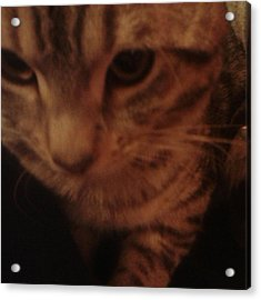 Sweet Tabby Acrylic Print by Julie Dunkley