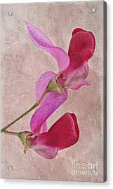 Sweet Textures 2 Acrylic Print by John Edwards