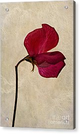 Sweet Textures Acrylic Print by John Edwards