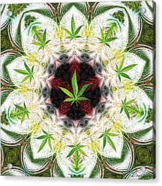 Sweetleaf Mandala Acrylic Print by Diana Haronis