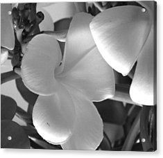 Acrylic Print featuring the photograph Sweetness by Karen Nicholson