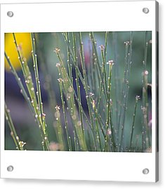Acrylic Print featuring the photograph Sweetness by Penni D'Aulerio