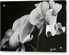 Sweetpea Blossoms Acrylic Print