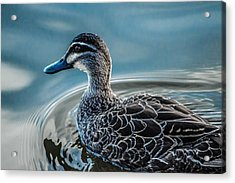 Swimming Around  Acrylic Print by Naomi Burgess