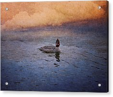 Swimming In A Frozen Lake Acrylic Print by Maria Angelica Maira