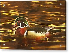 Acrylic Print featuring the photograph Swimming In A Sea Of Gold  by Brian Cross