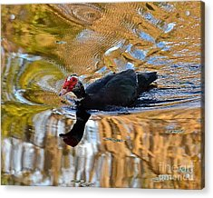Swimming In Color Acrylic Print by Carol  Bradley