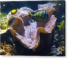 Acrylic Print featuring the photograph Swimming In Danger by Brigitte Emme
