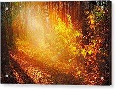 Swimming In Golden Light Acrylic Print by Jenny Rainbow