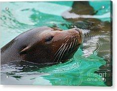 Swimming Sea Lion Acrylic Print by DejaVu Designs