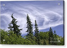 Swirling Clouds Crooked Trees Acrylic Print