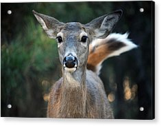 Acrylic Print featuring the photograph Swish Of The Tail  by Rita Kay Adams
