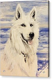 Swiss Shepherd Acrylic Print by Isabella F Abbie Shores FRSA