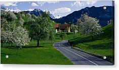 Switzerland, Luzern, Trees, Road Acrylic Print