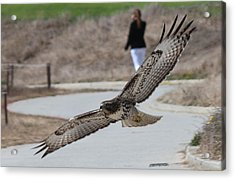 Acrylic Print featuring the photograph Swoop by Christy Pooschke