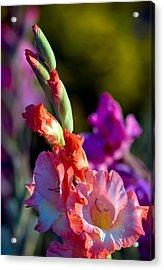 Sword Lily 3 Acrylic Print