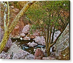 Sycamore And Cottonwood In Whitewater Catwalk National Recreation Trail Near Glenwood-new Mexico  Acrylic Print by Ruth Hager