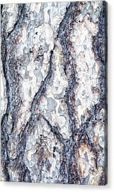 Sycamore Bark Abstract Acrylic Print