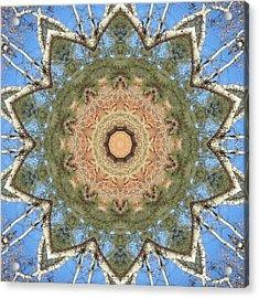 Sycamore Splendor Acrylic Print