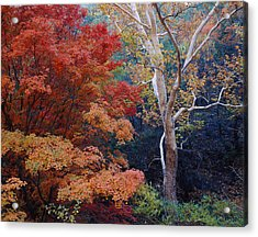 Sycamore Trees And Bigtooth Maple Acer Acrylic Print