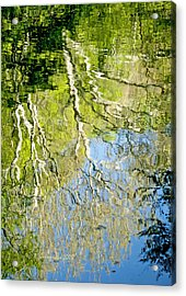 Acrylic Print featuring the photograph Sycamore Trees Reflected In A Stream by A Gurmankin