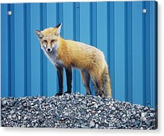 Acrylic Print featuring the photograph Sydney Fox by Jason Lees