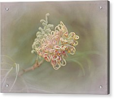 Sylvia Acrylic Print by Elaine Teague