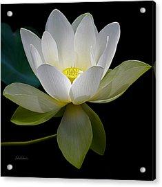Symbolic White Lotus Acrylic Print