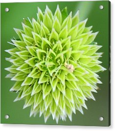 Symmetry In Green Acrylic Print by Julie Cameron