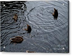 Synchronised Swimming Team Acrylic Print