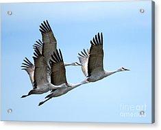 Synchronized Acrylic Print by Mike Dawson