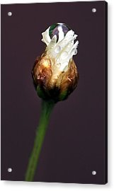 Acrylic Print featuring the photograph Synergy I by Marion Cullen