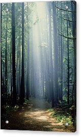 T. Bonderud Path Through Trees In Mist Acrylic Print