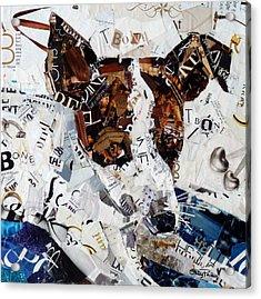 T-bone Acrylic Print by Suzy Pal Powell