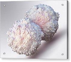 T-lymphocytes Acrylic Print by Maurizio De Angelis