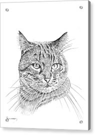 Tabby Acrylic Print