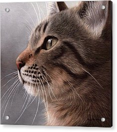 Tabby Cat Painting Acrylic Print by Rachel Stribbling