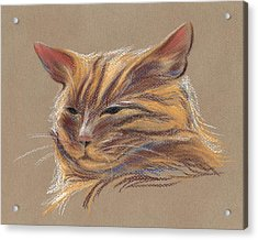 Acrylic Print featuring the pastel Tabby Cat Portrait In Pastels by MM Anderson