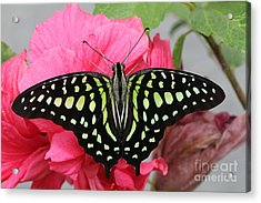 Acrylic Print featuring the photograph Tailed Jay Butterfly #6 by Judy Whitton