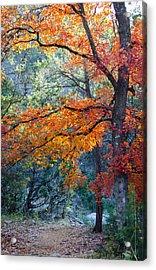 Take A Bough Acrylic Print by Debbie Karnes