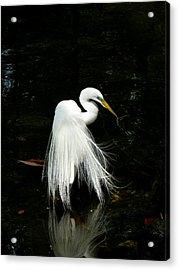 Take A Bow Acrylic Print by Susan Duda