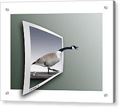 Take A Gander Acrylic Print by Brian Wallace