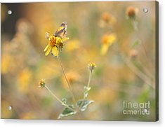 Take A Rest Acrylic Print by Crush Creations